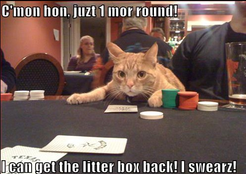 funny-pictures-cat-gambler-about-to-win