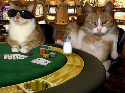Cats Playing Blackjack