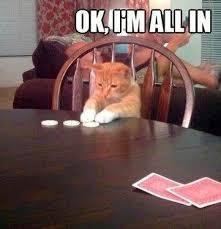 cat at poker