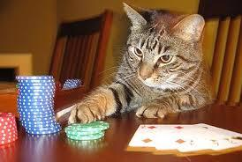Cat Advantage Player