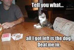Cat playing poker