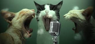 Cats singing Karaoke